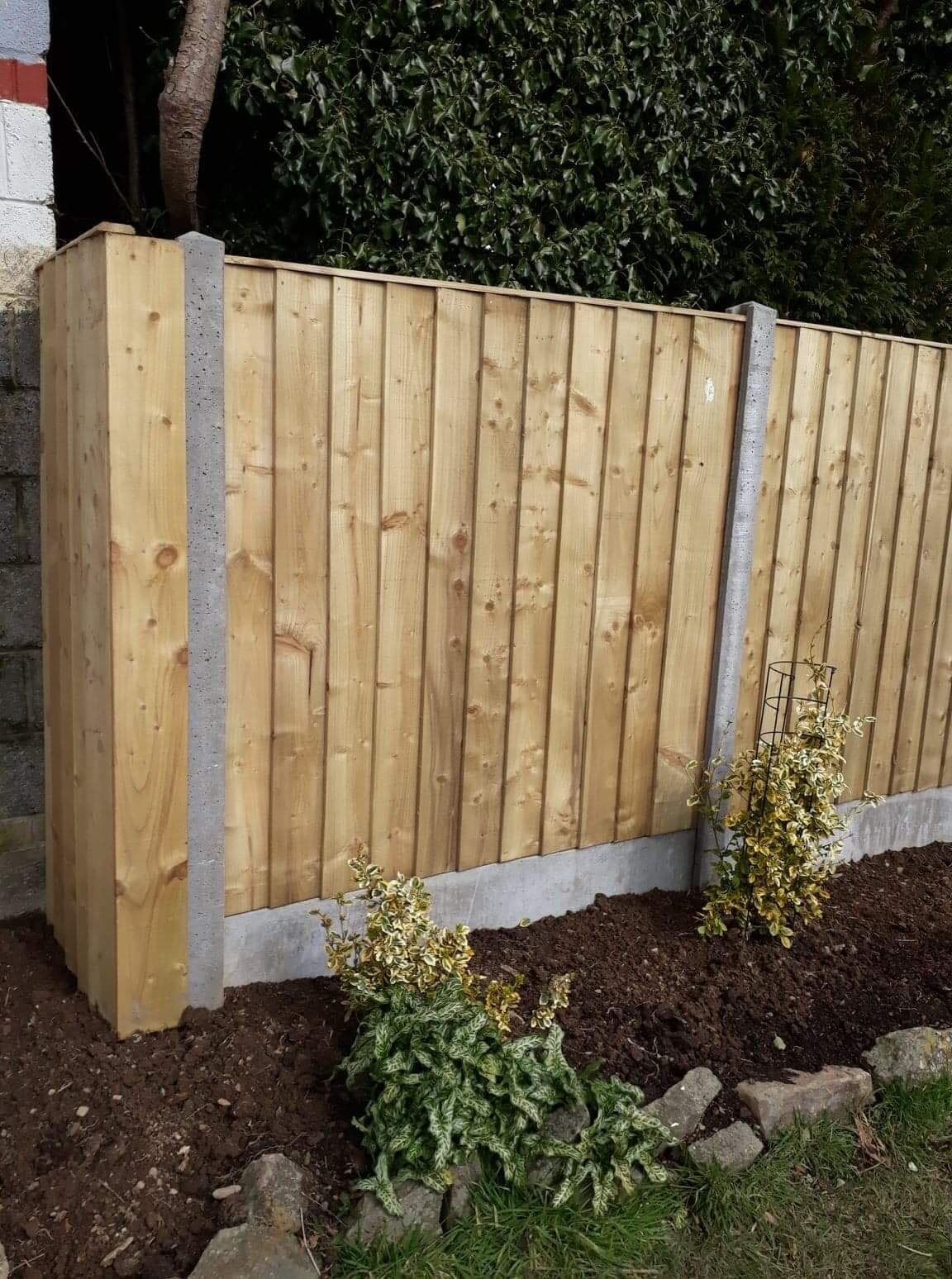 Straight edged top of panel fencing in concrete base. Border in front, with planting.